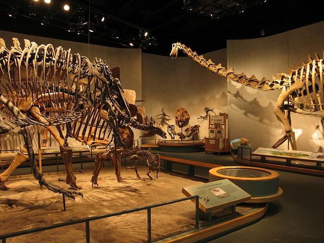 Denver Natural History Museum